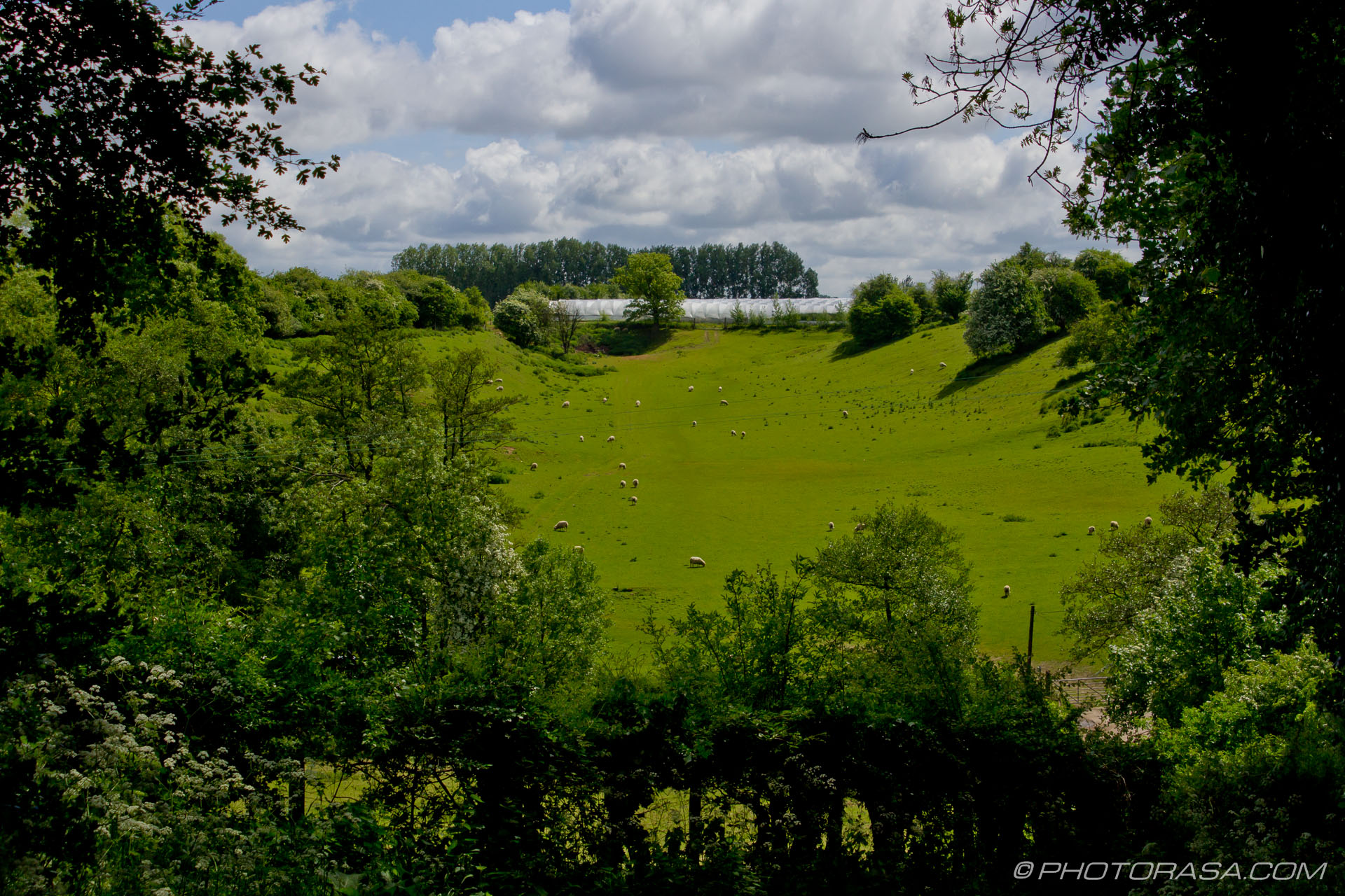 http://photorasa.com/countryside-otham/sheep-field-near-stoneacre-place/