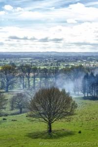 trees and smoke