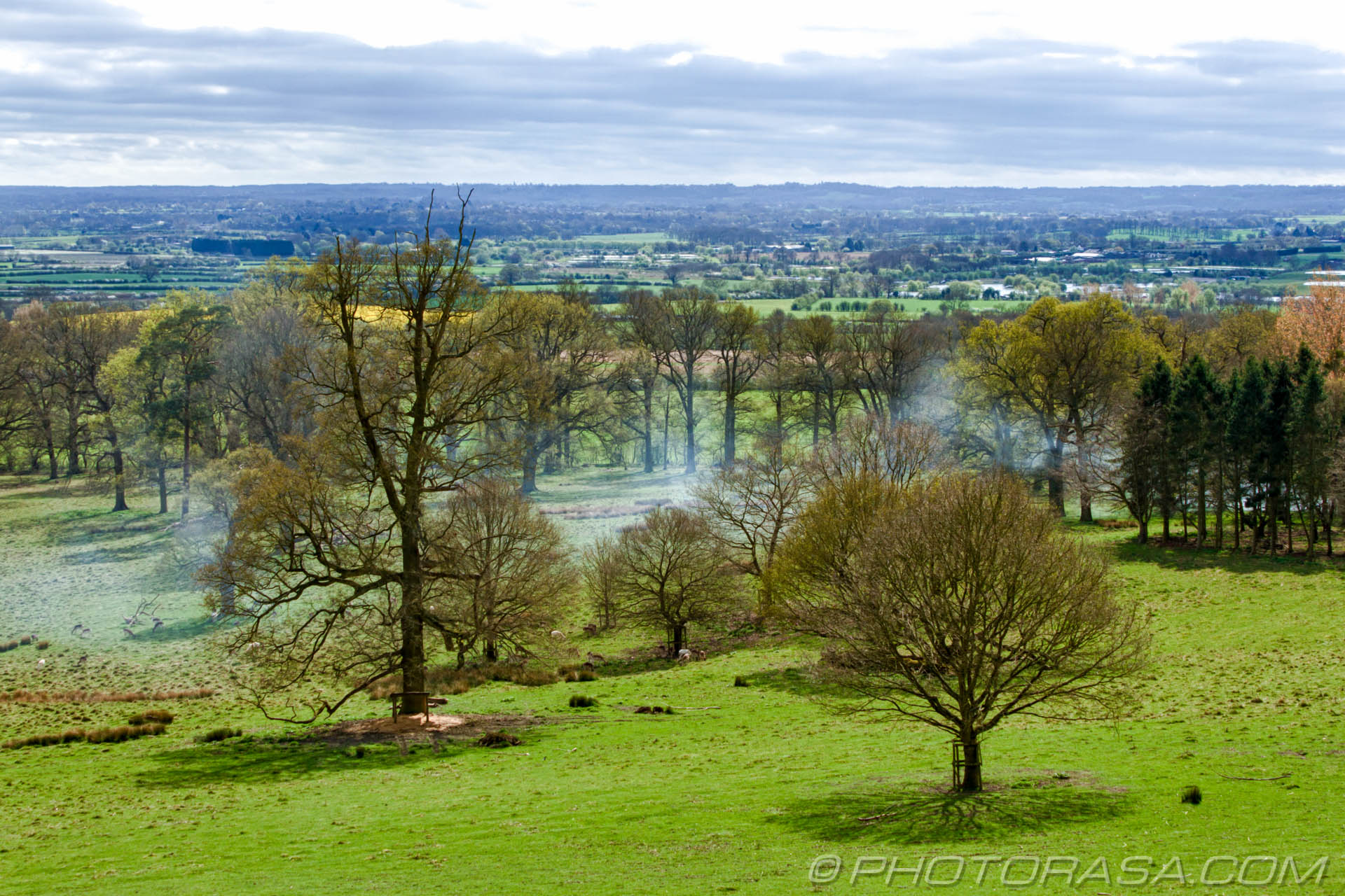 https://photorasa.com/view-boughton-monchelsea-churchyard/two-trees-and-deer/