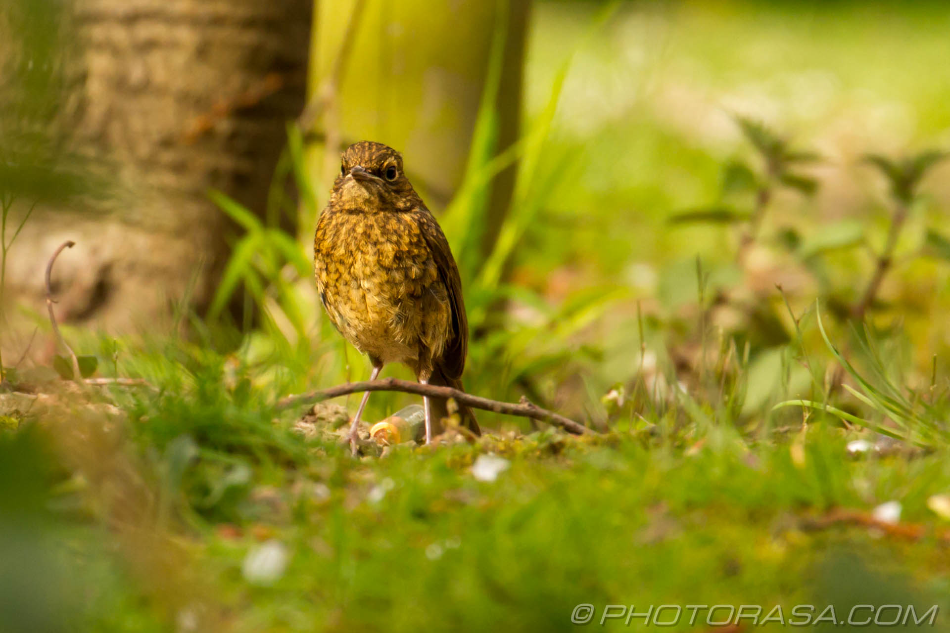 http://photorasa.com/young-robin-brown-orange/low-to-the-ground/