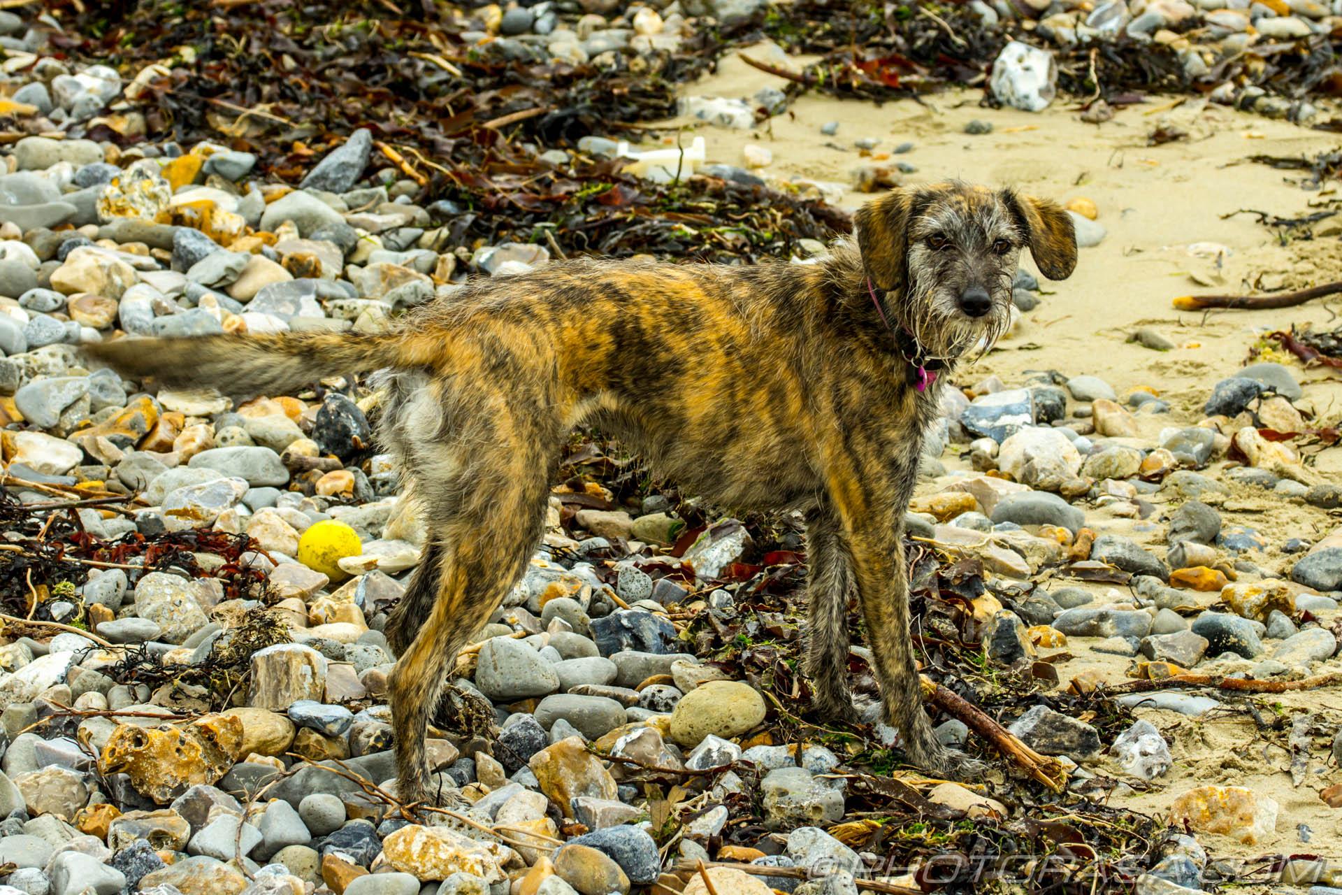 https://photorasa.com/dog-sand/amongst-the-rocks-and-sand-and-sticks-and-seaweed/