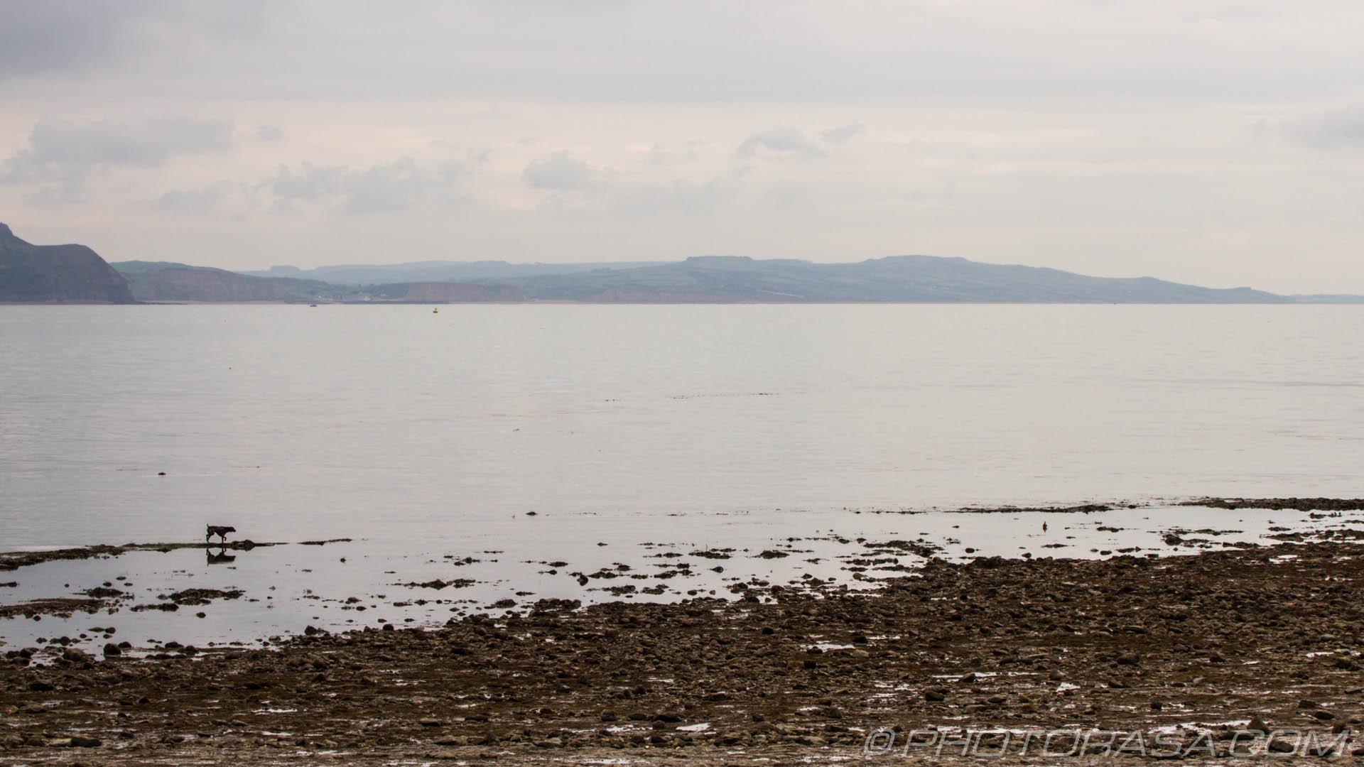 https://photorasa.com/walking-dog-jurassic-coast/coastal-view-with-dog/