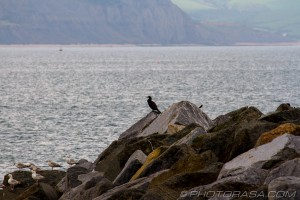 cormorant on the rocks