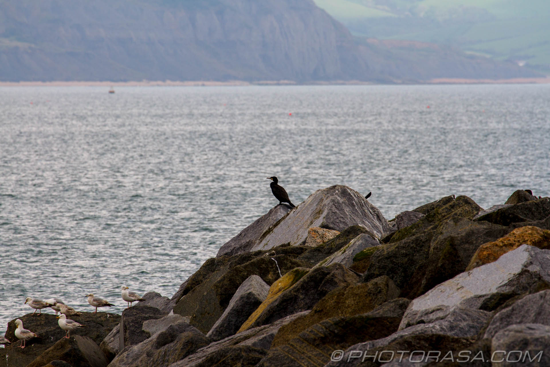 http://photorasa.com/lyme-regis/cormorant-on-the-rocks/