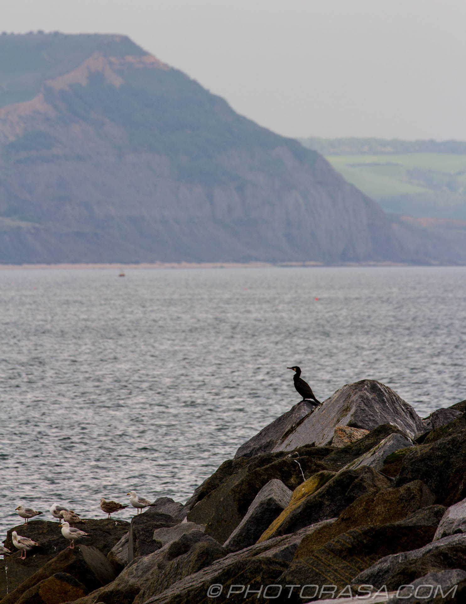 http://photorasa.com/lyme-regis/cormorant-with-cliffs-in-background/
