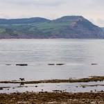 dog and jurassic coast