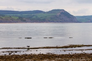 dog and jurassic coast