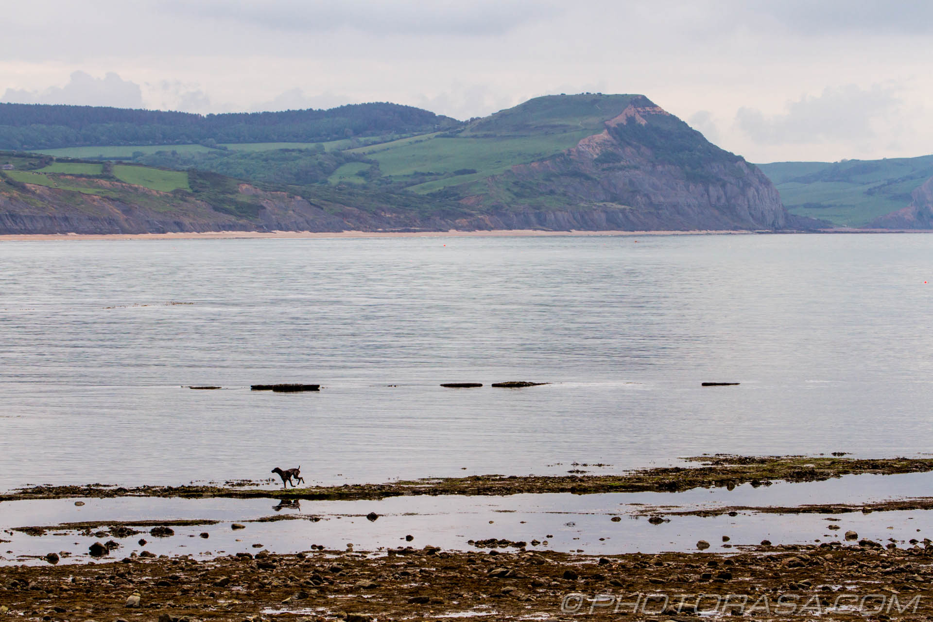 http://photorasa.com/walking-dog-jurassic-coast/dog-and-jurassic-coast/