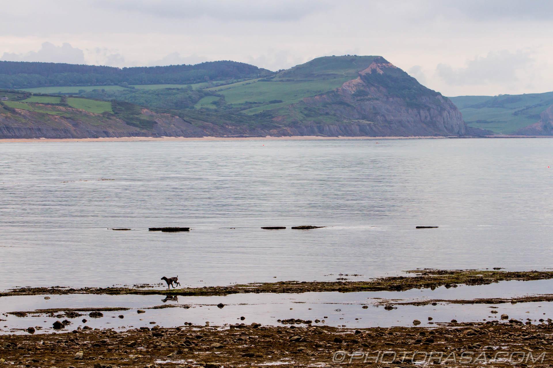 https://photorasa.com/walking-dog-jurassic-coast/dog-and-jurassic-coast/