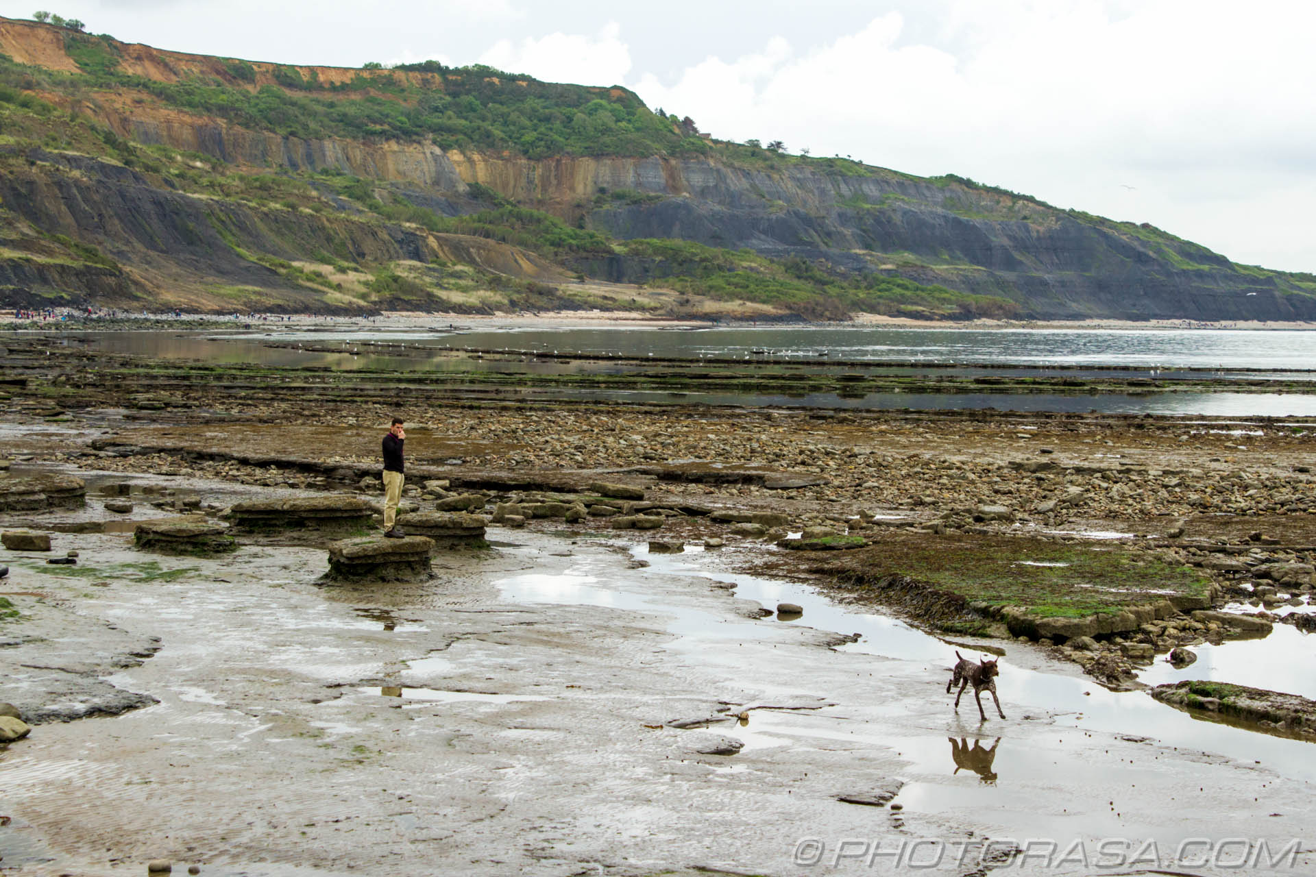 http://photorasa.com/walking-dog-jurassic-coast/dog-galloping-from-his-owner/