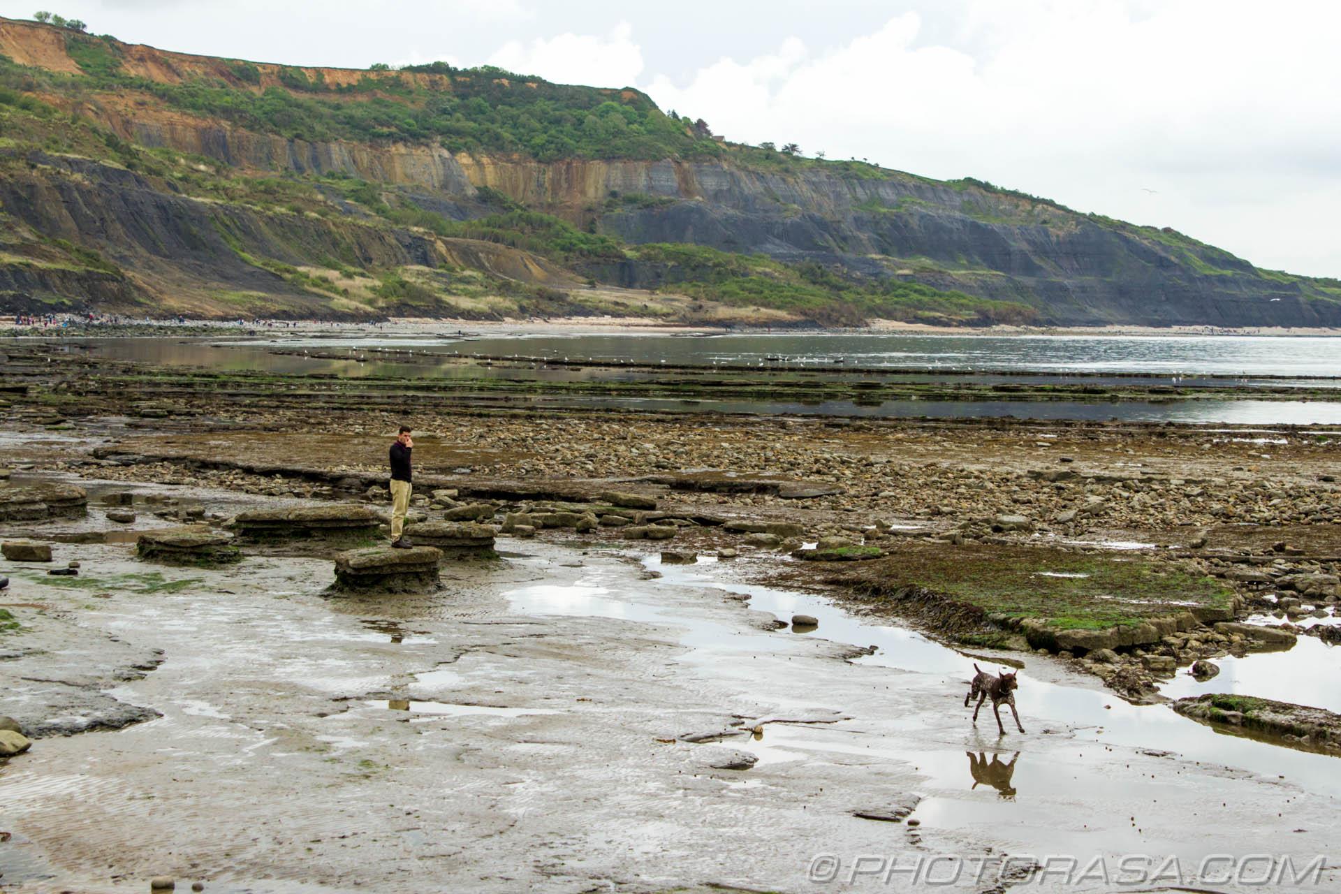 https://photorasa.com/walking-dog-jurassic-coast/dog-galloping-from-his-owner/