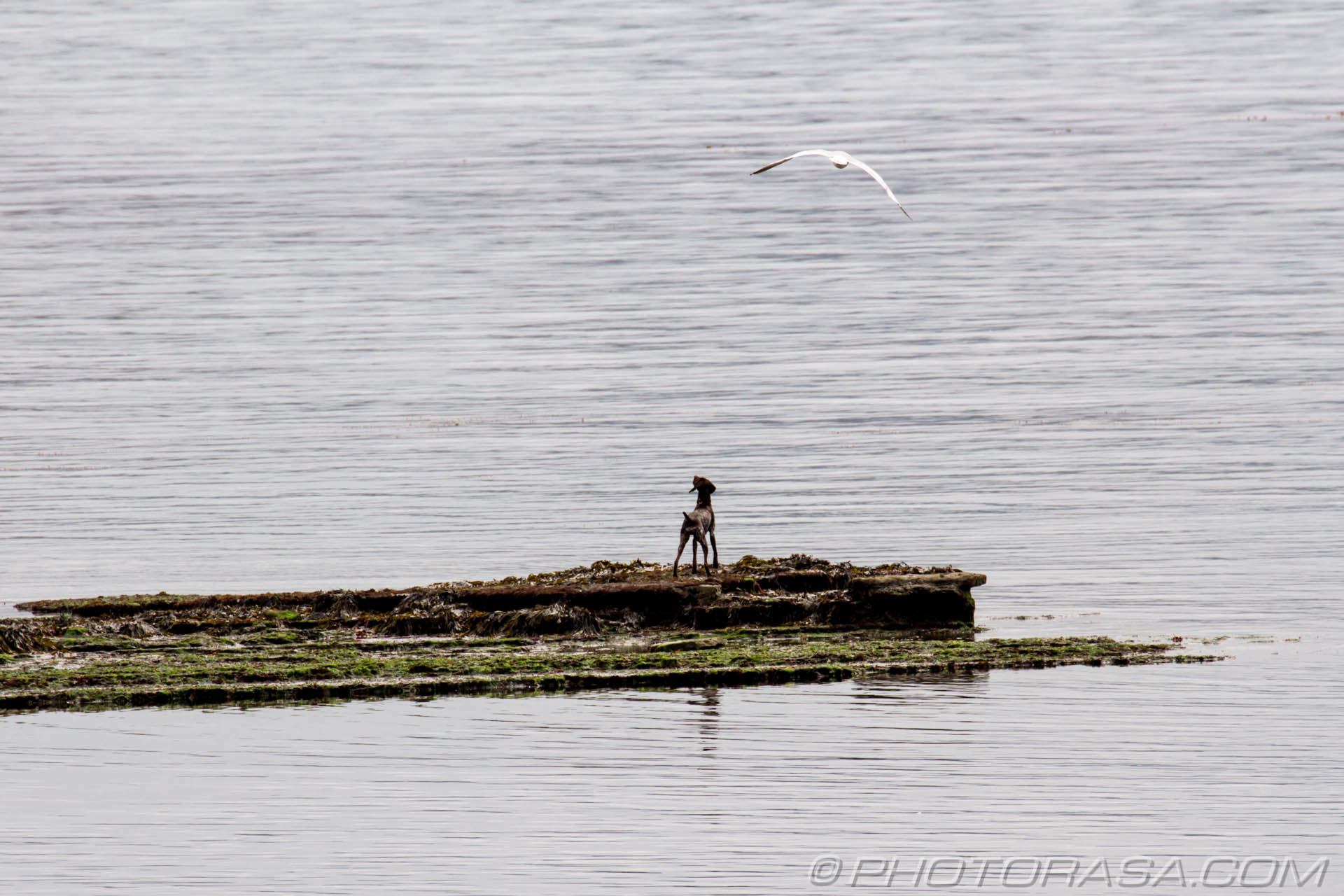 http://photorasa.com/walking-dog-jurassic-coast/dog-looking-up-at-seagulls-and-wishing-he-could-fly/