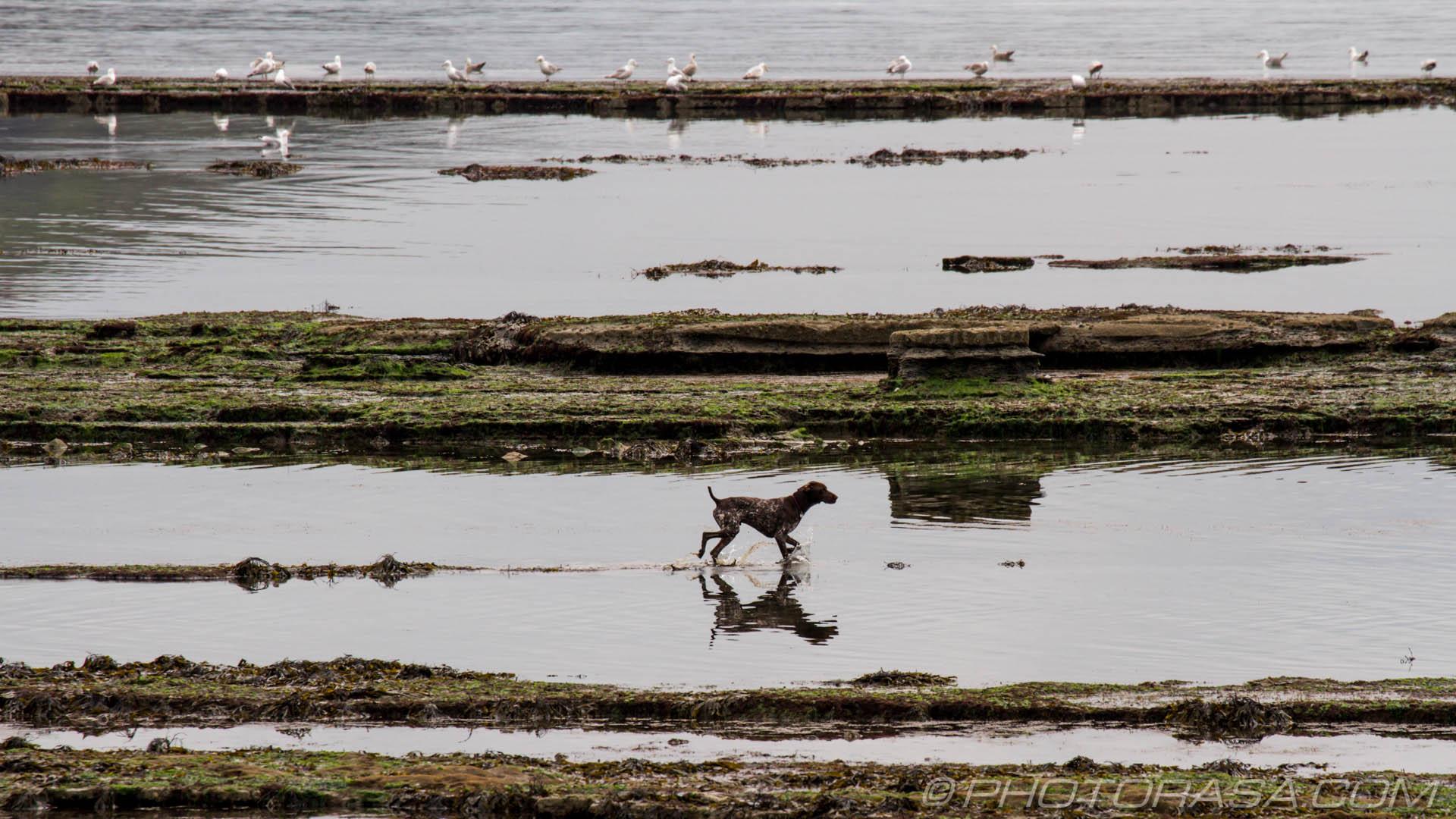 https://photorasa.com/walking-dog-jurassic-coast/dog-splashing-about/