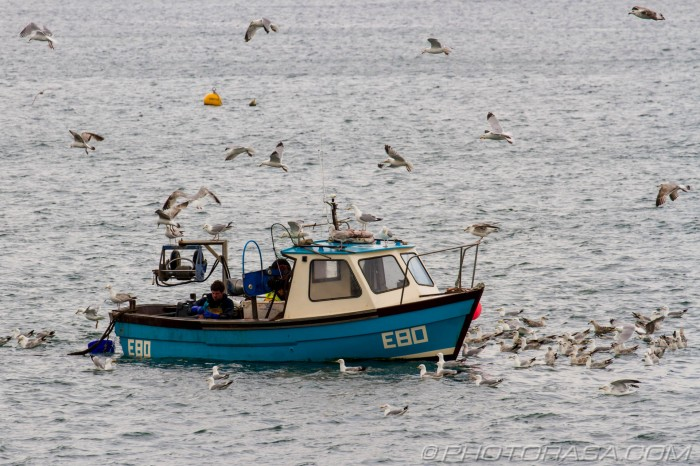 fishing boat surrounded by seagulls