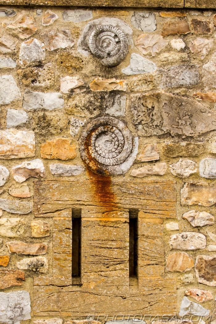 fossils in brickwork