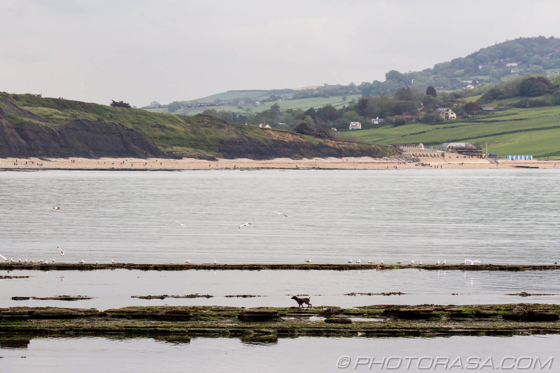 http://photorasa.com/walking-dog-jurassic-coast/galloping-across-the-water/