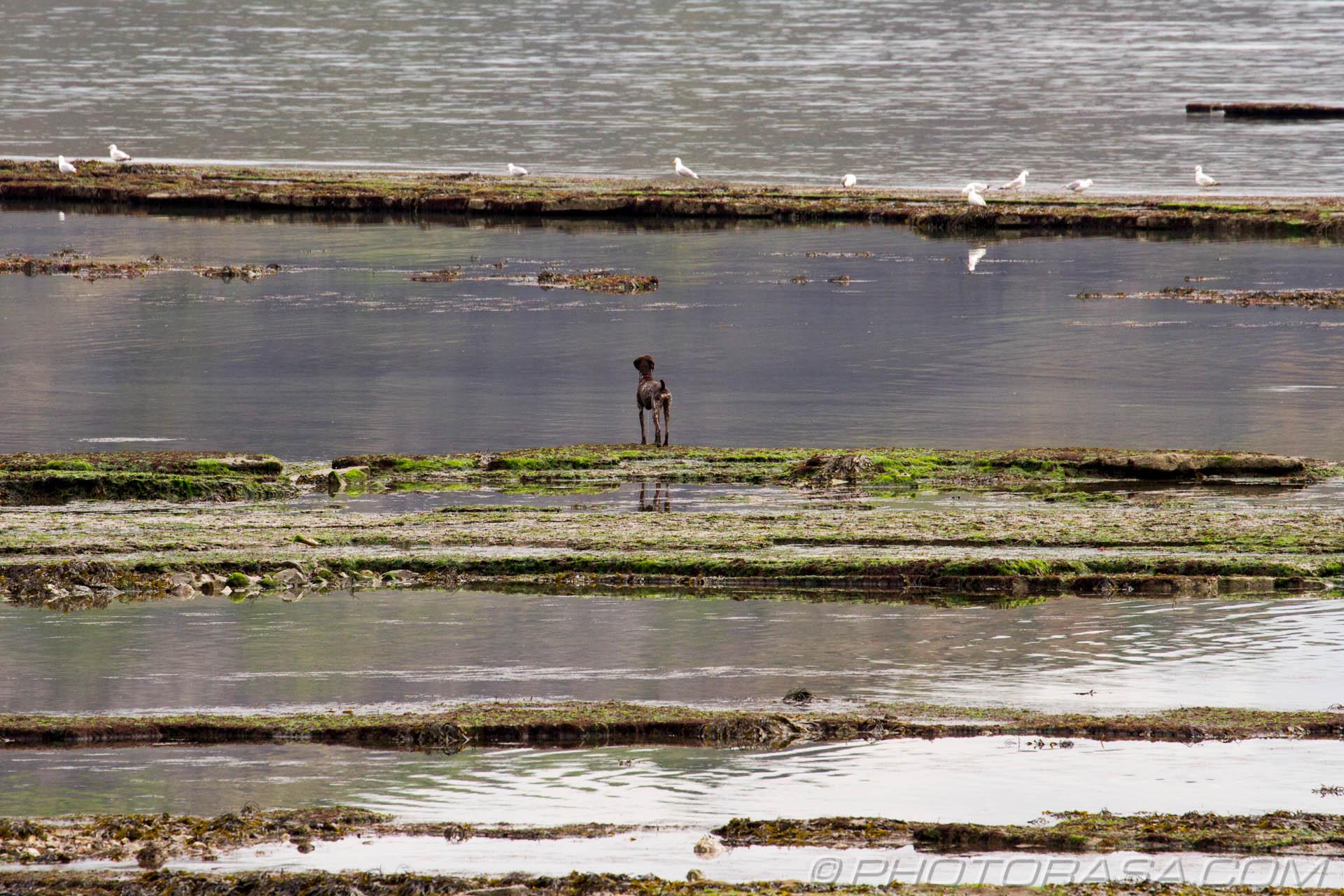 https://photorasa.com/walking-dog-jurassic-coast/looking-across-the-water-at-his-prey/
