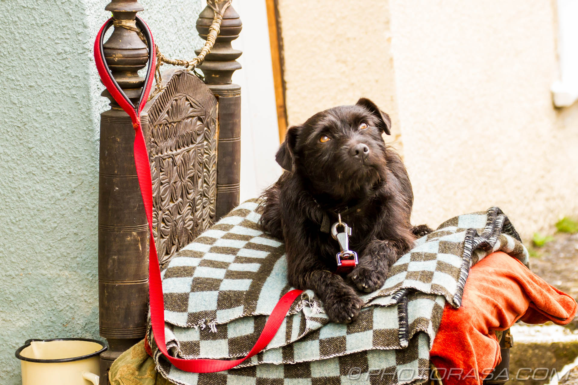 https://photorasa.com/princely-terrier/looking-up/