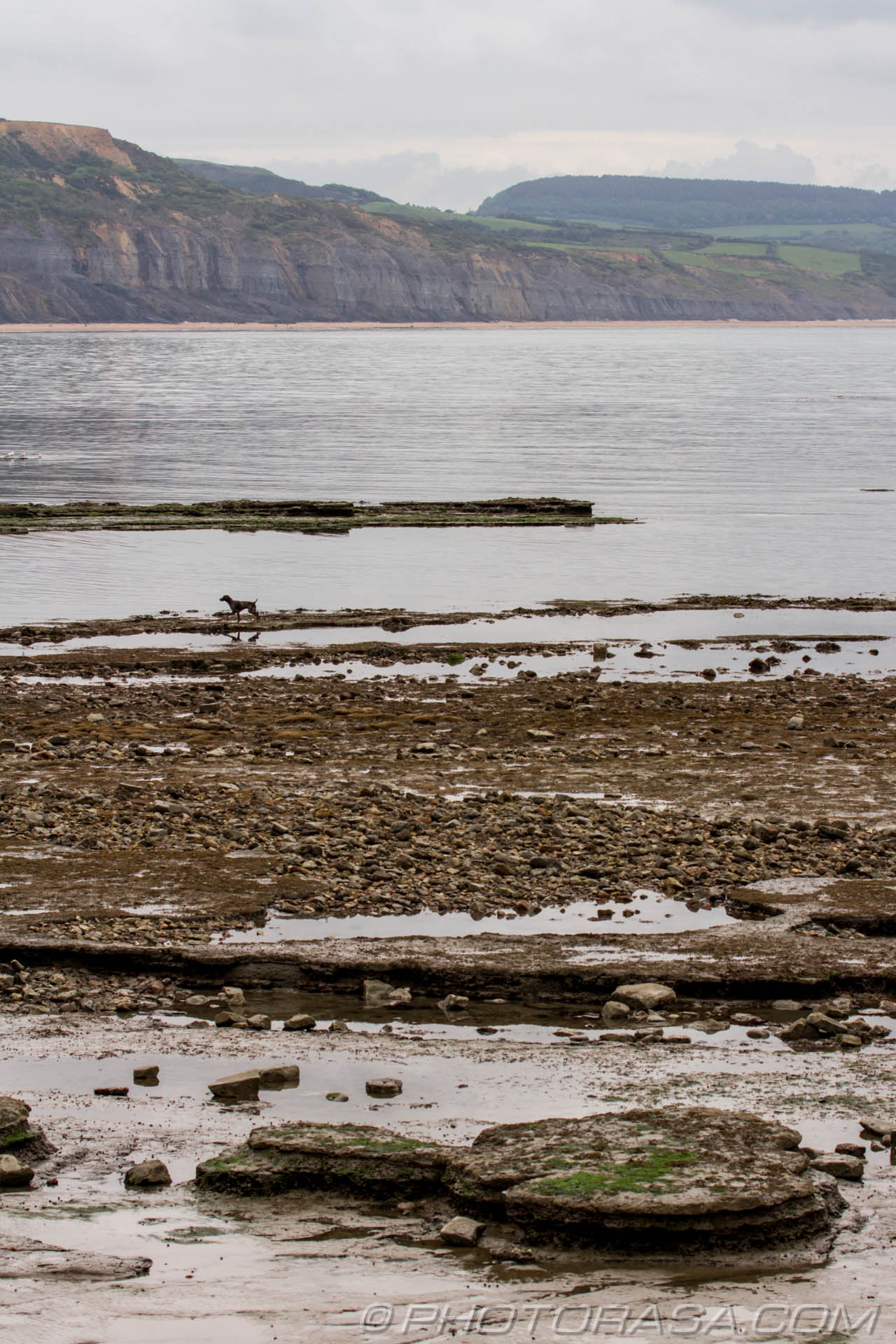 http://photorasa.com/walking-dog-jurassic-coast/rocky-old-beach-and-dog/