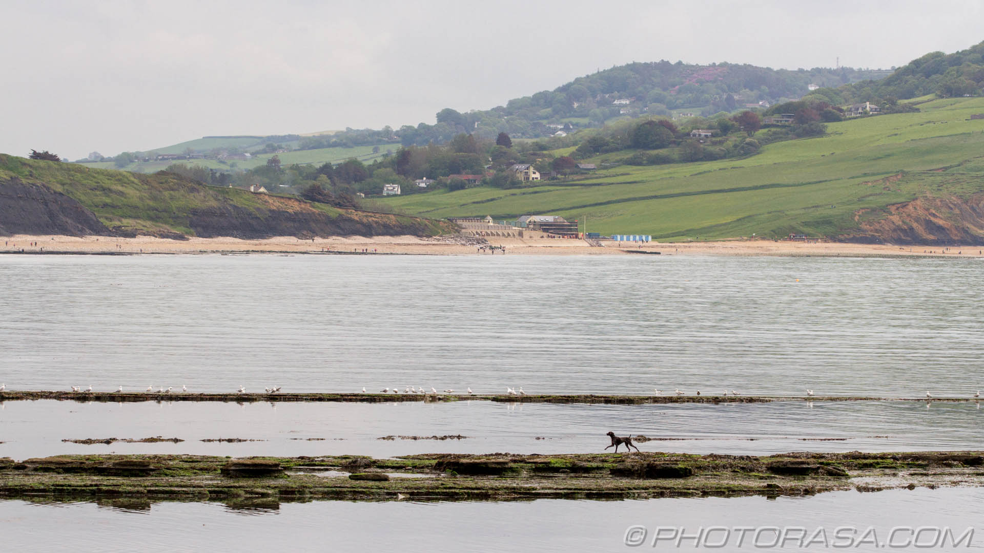 http://photorasa.com/walking-dog-jurassic-coast/running-across-water-with-background-landscape/