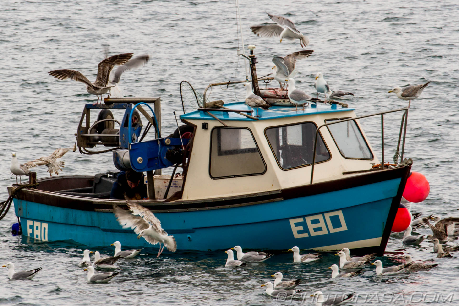 http://photorasa.com/lyme-regis/seagulls-swarming-over-returned-fishing-boat/