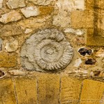 spiral fossil in brickwork