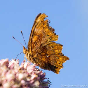 underwing against blue sky