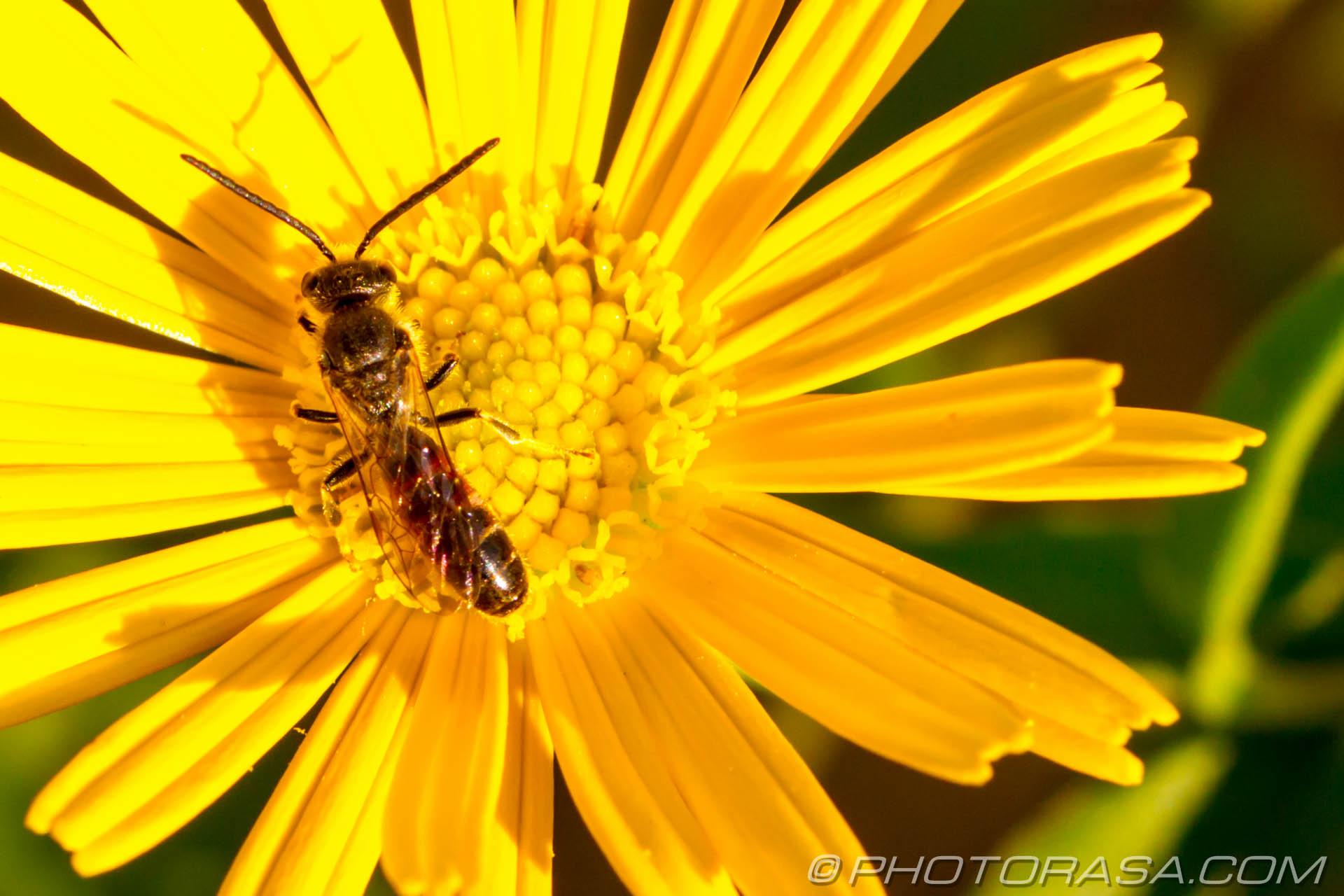 https://photorasa.com/flower-fly/casting-shadow/