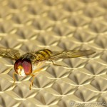 fly on light shade