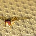 fly on light shade