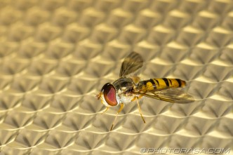 plastic light pattern and marmalade fly