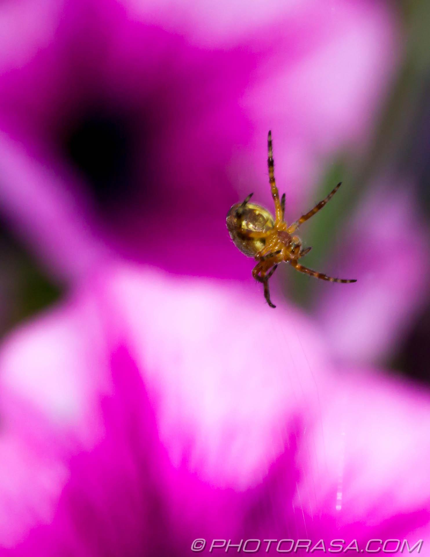 http://photorasa.com/spider-petunias/stradling-the-lines/