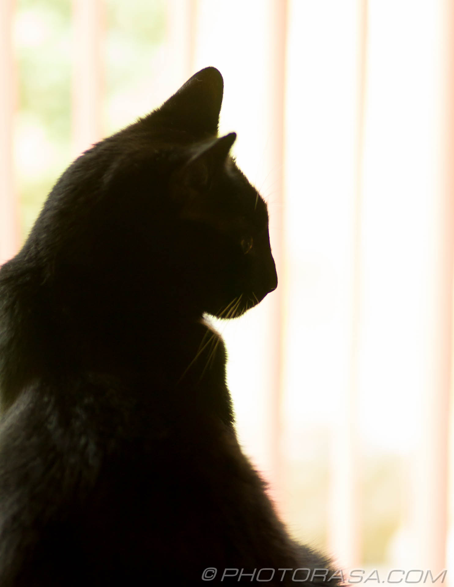 http://photorasa.com/black-cats/profile-by-window/