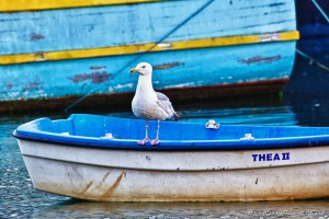 seagull on row boat