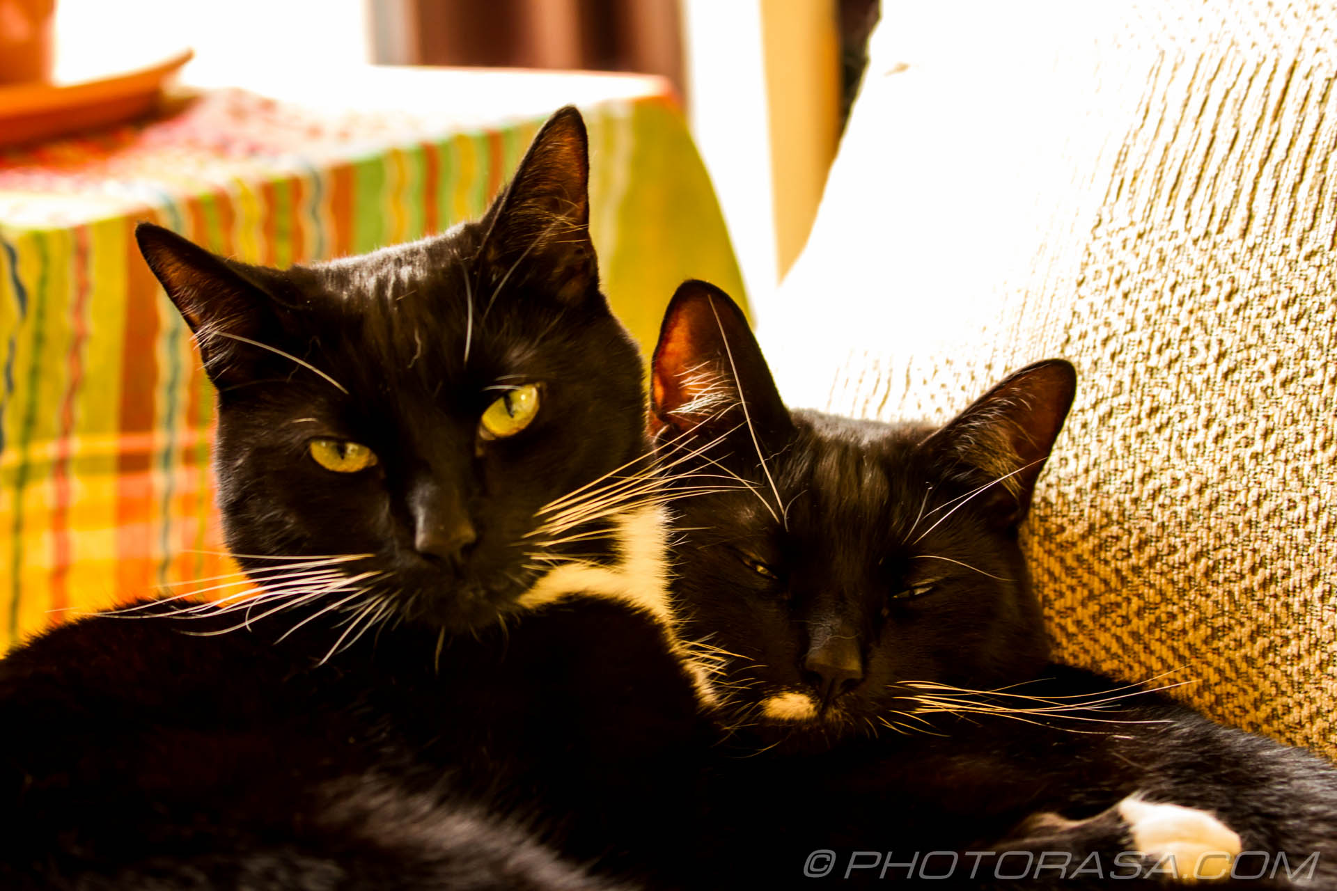http://photorasa.com/black-cats/two-black-cats-cuddling/