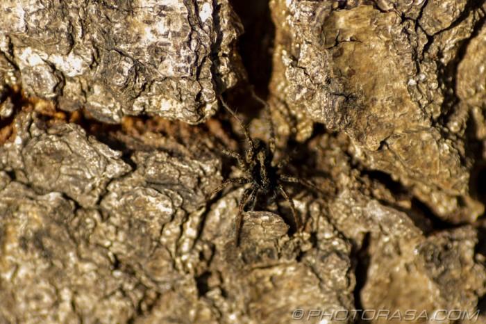 camouflaged spider