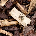 spider on wood and bark