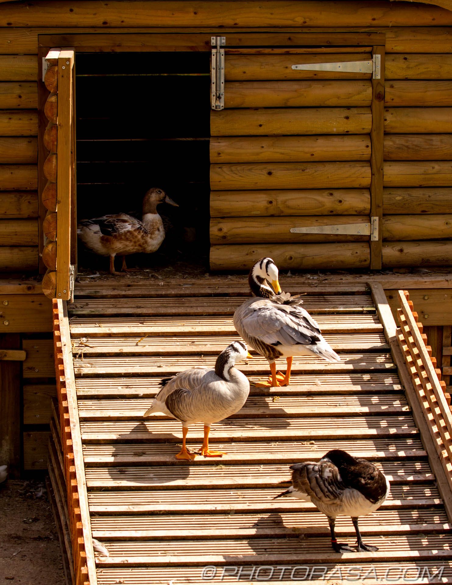 http://photorasa.com/birds-greenworld/at-the-bird-house/