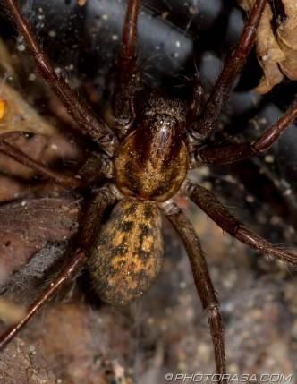 large spider near nest