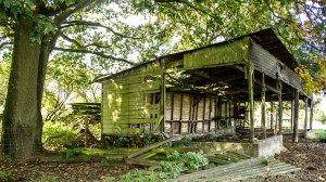 decrepit animal shed