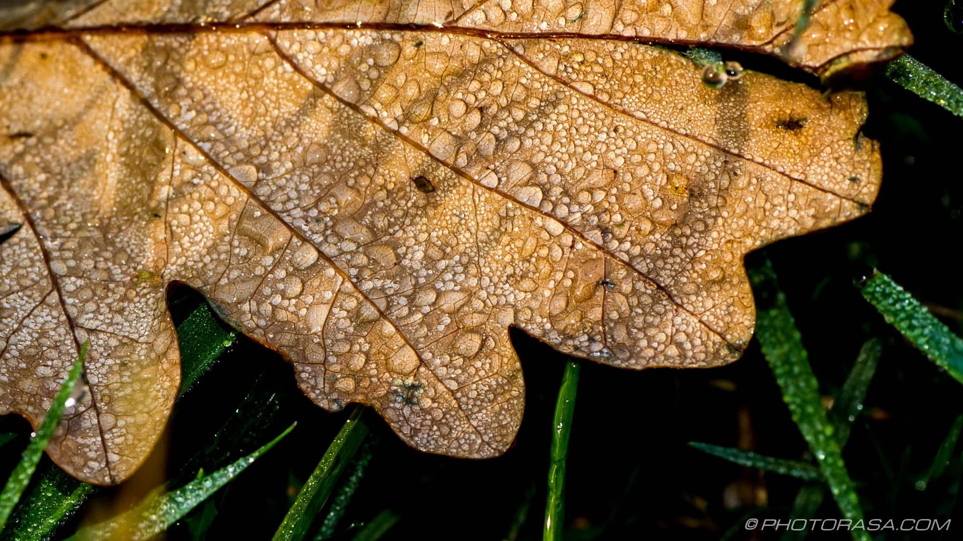 http://photorasa.com/leaves/brown-oak-leaf-with-dew-and-grass-shadow/