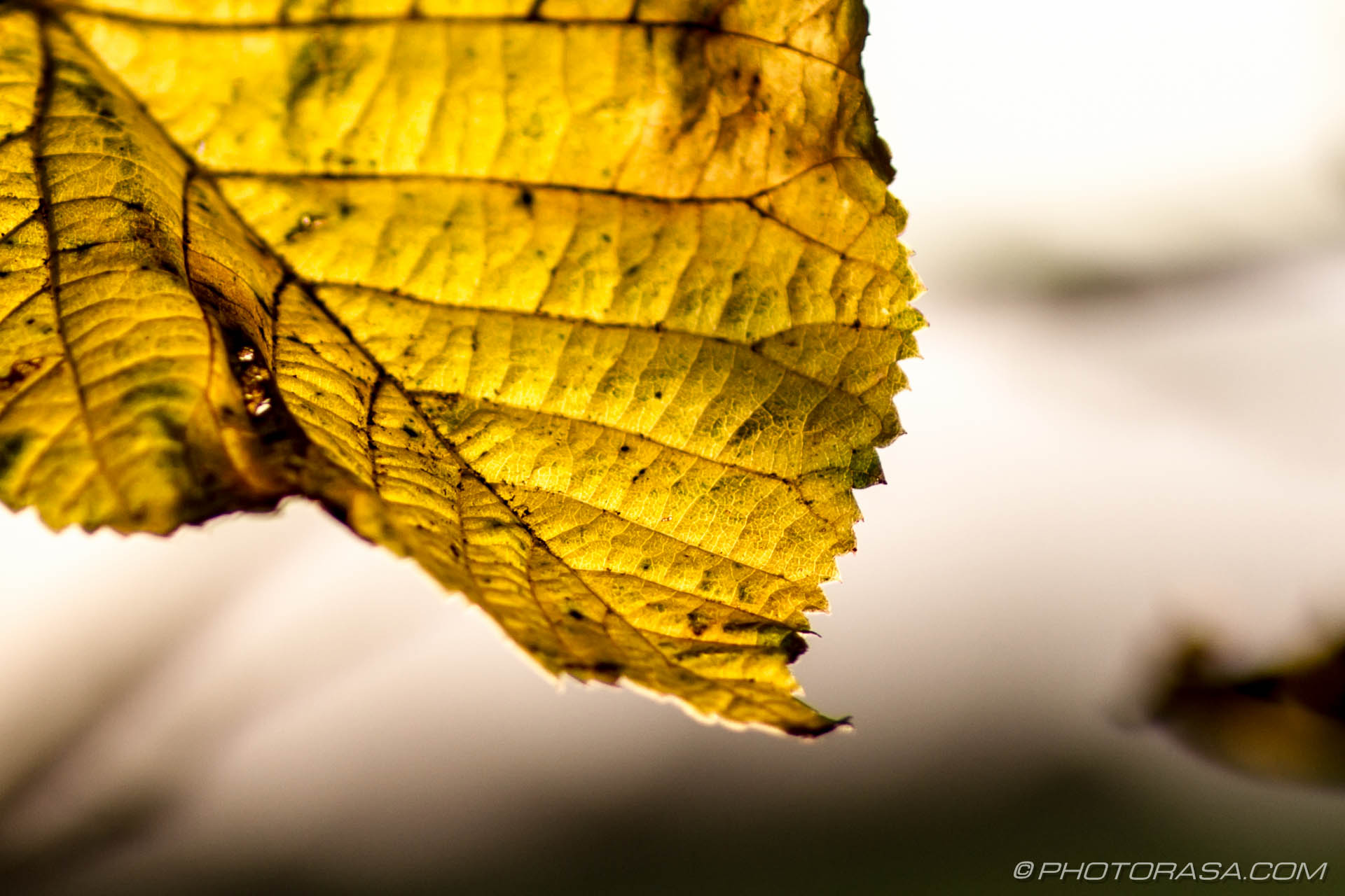 http://photorasa.com/leaves/yellow-autumn-leaf/