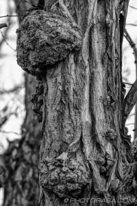 bark growth
