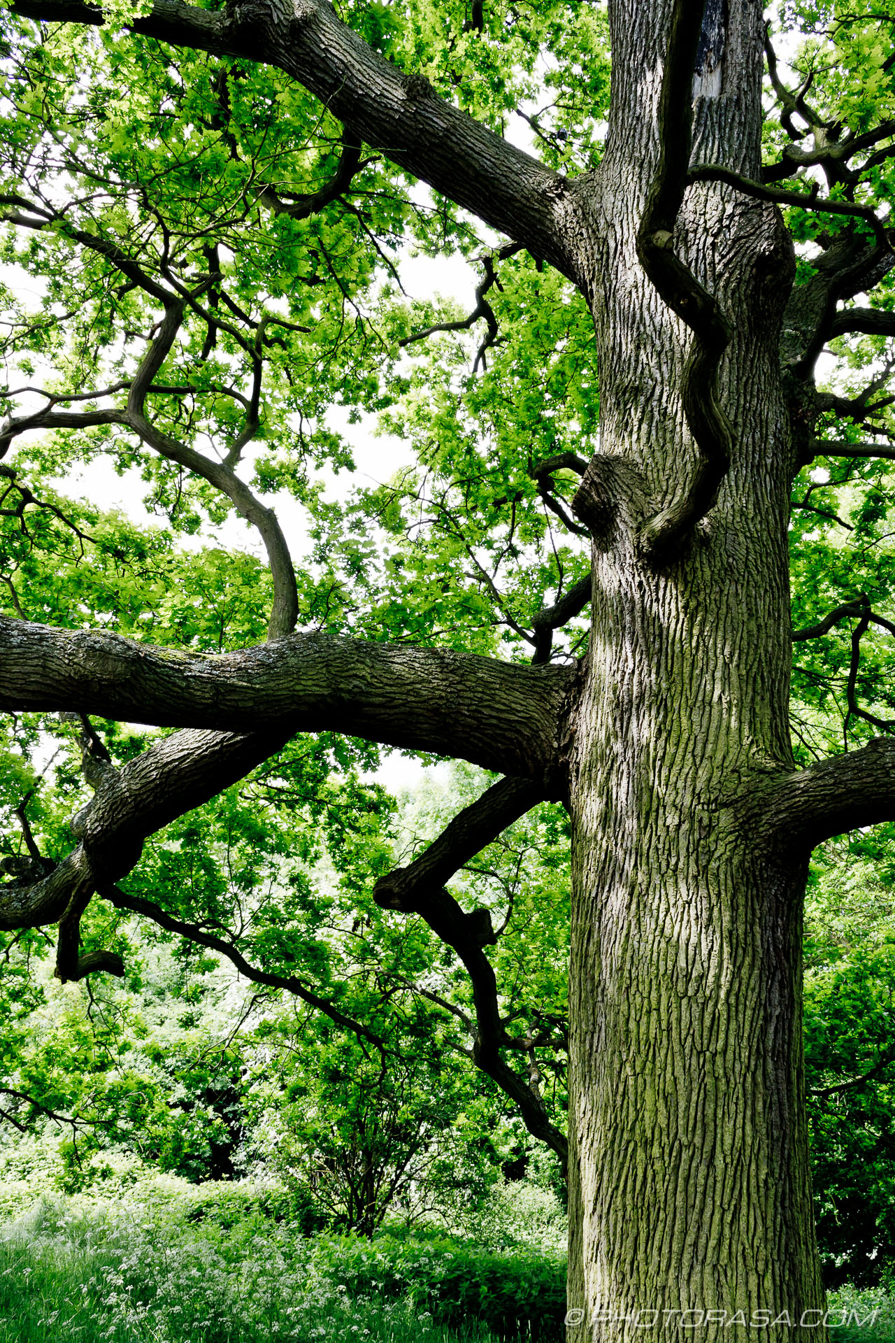 http://photorasa.com/wood-and-bark-textures/oak-trunk-and-branches/