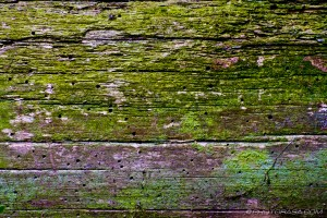 old wood with woodworm and moss stains