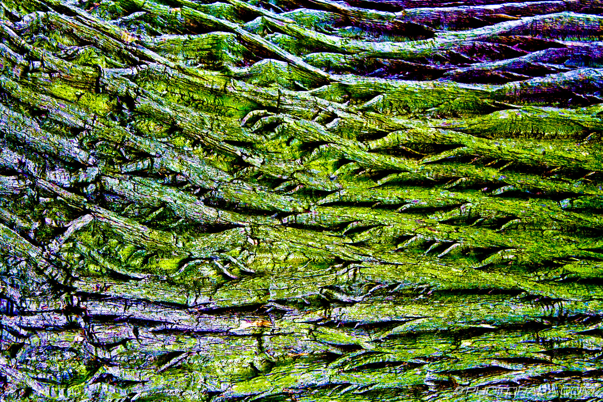 https://photorasa.com/wood-and-bark-textures/trunk-criss-cross-pattern/