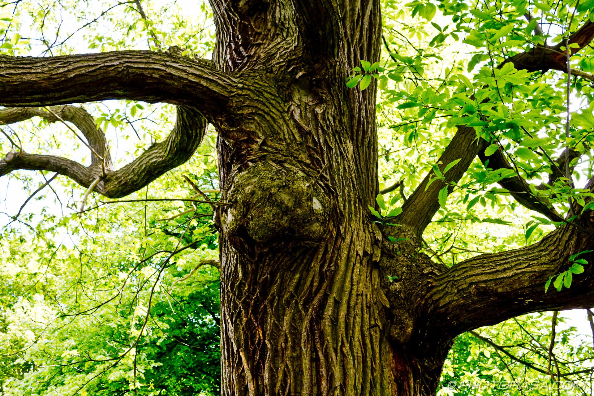 https://photorasa.com/wood-and-bark-textures/trunk-lines/