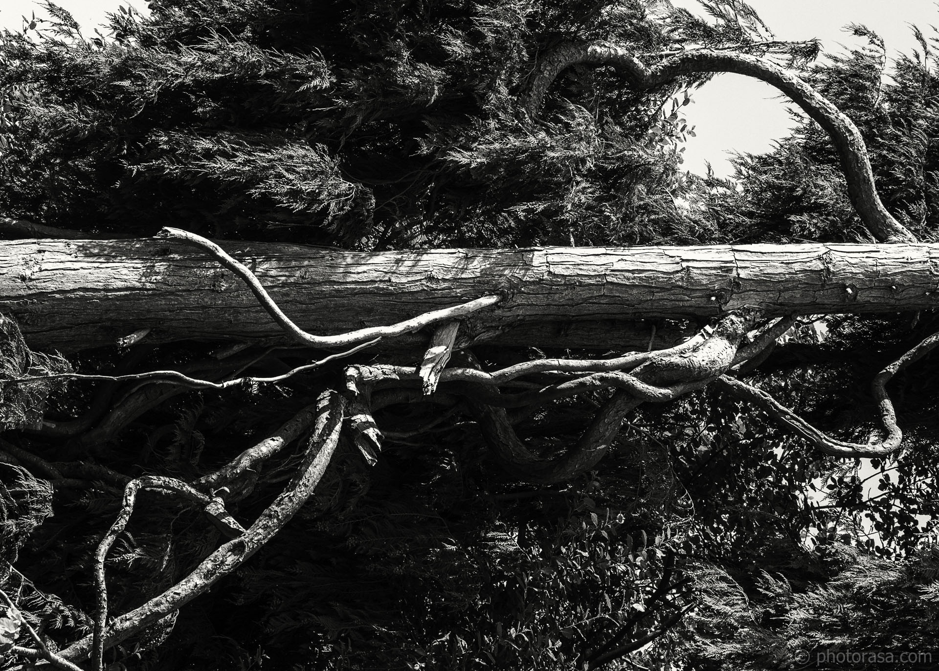 http://photorasa.com/wood-and-bark-textures/twisted-branches/