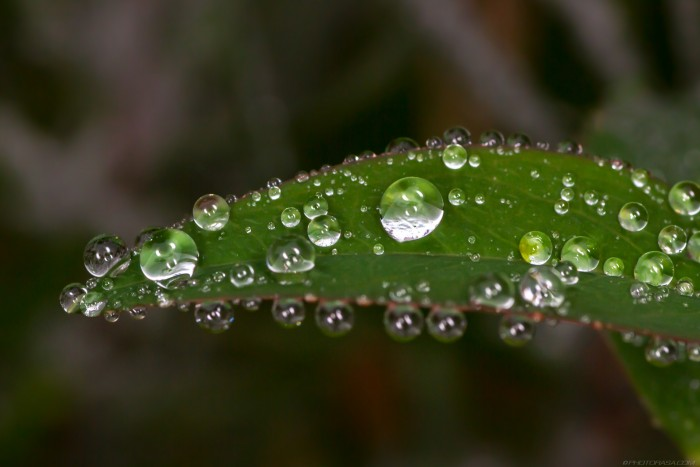 droplets of water on tiny green leaf