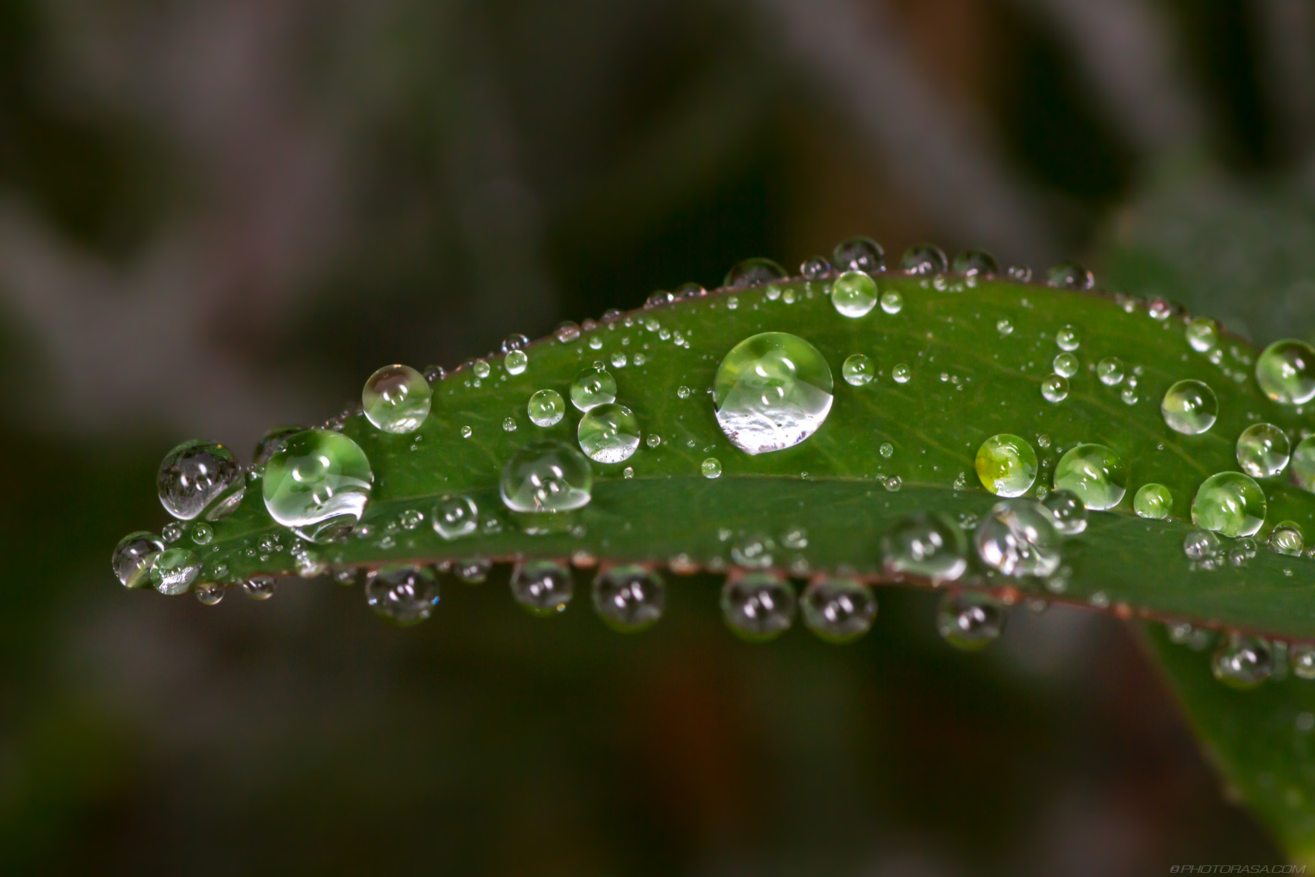 http://photorasa.com/tiny-water-droplets-on-plants/droplets-of-water-on-tiny-green-leaf/